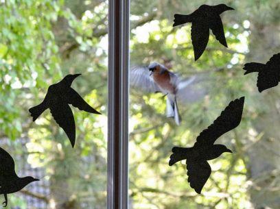 Sticker pour vitre anti-collision 5 oiseaux noirs. Luminis-Films
