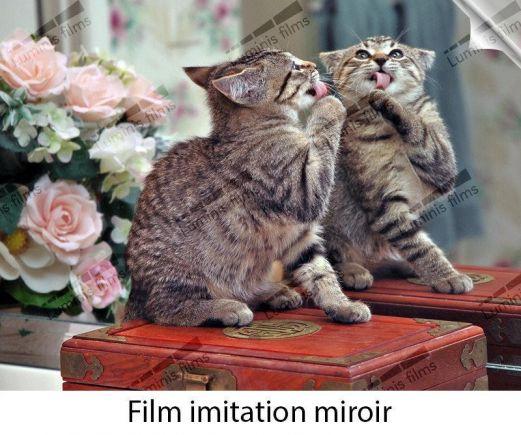 Film miroir total réfléchissant argent