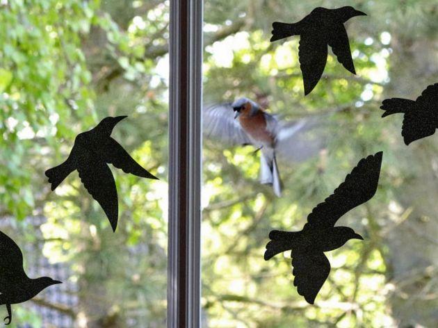 Sticker pour vitre anti-collision 5 oiseaux noirs. Luminis Films