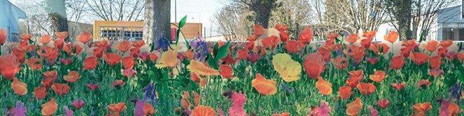 film à fleurs. Luminis-Films