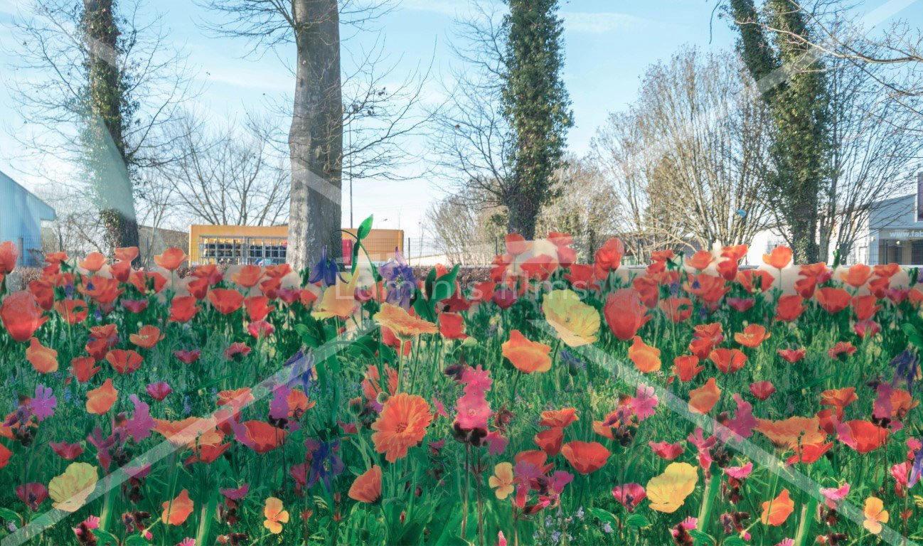 Film à fleurs transparentes de Coquelicot rouge - FLC 194. Luminis-Films