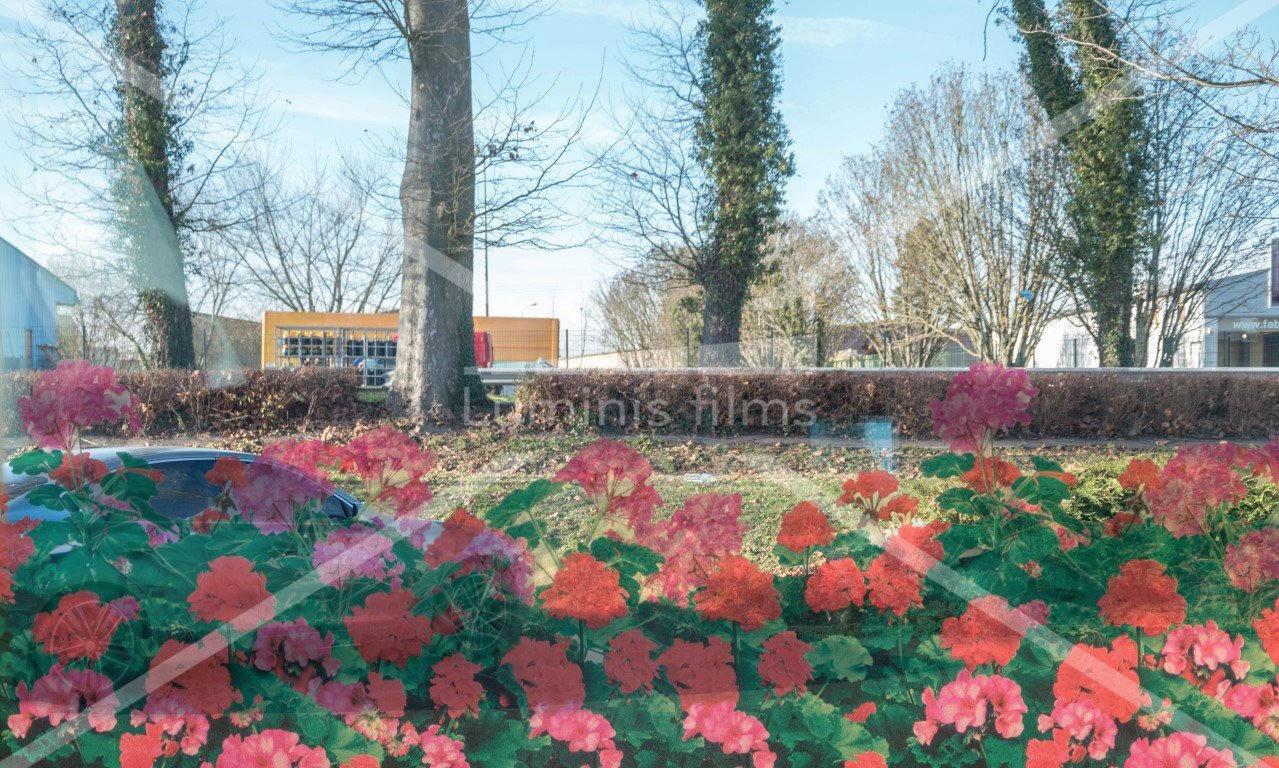 Film à fleurs transparentes de Géraniums - FLG 192. Luminis-Films